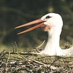 20180408-133143 Storch & Nest Bokeh