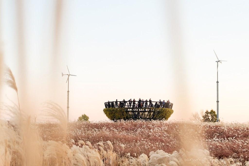 silver_grass_park_seoul