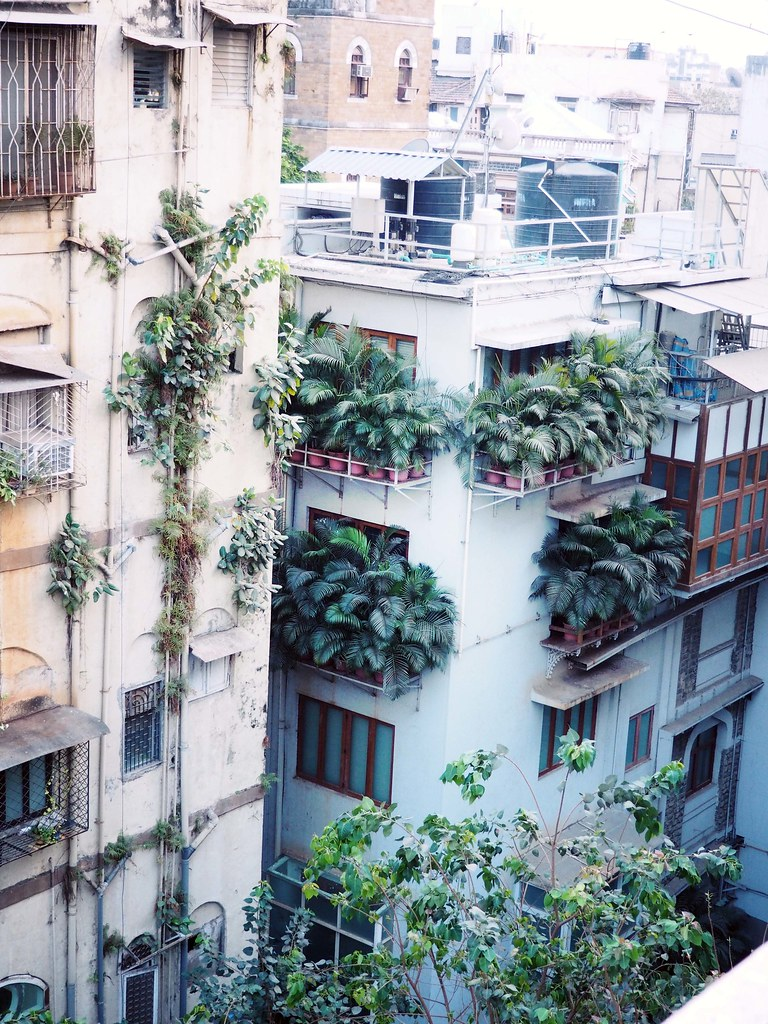 Palm Trees Colaba Mumbai Backstreet Balcony India Fashionicide_effected