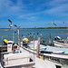 Rio Lagartos-Yucatan-Mexico por johnfranky_t