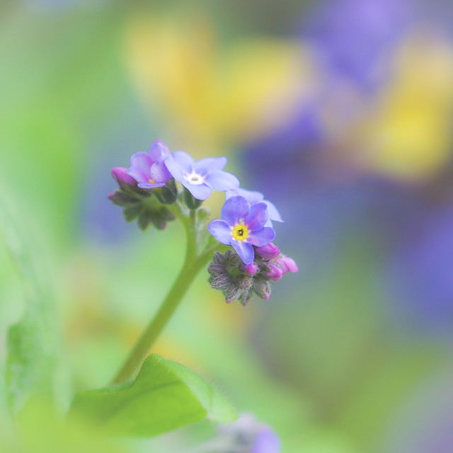 Forget Me Not!