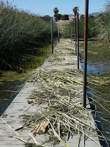 2018-06-11 - Walking around - DOW's Wetland Preserve