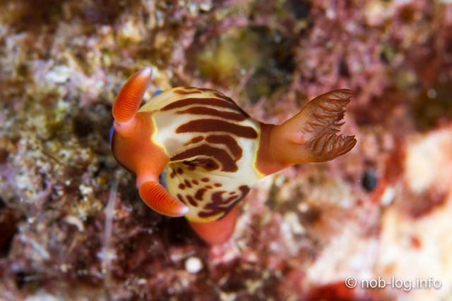サンゴの産卵ナイト?