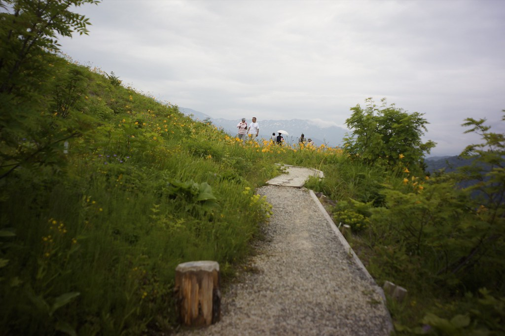 CONTAX Gレンズ総動員で挑む西山白山高山植物園その6
