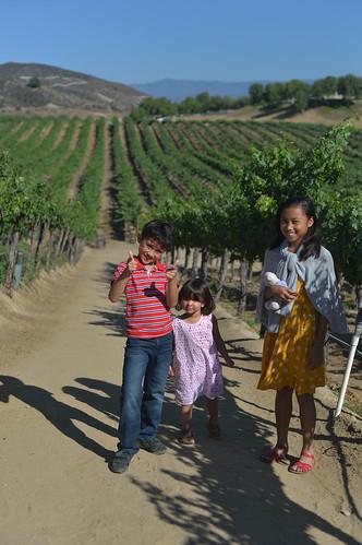 the kids, vineyard