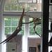 Lapworth Museum of Geology - University of Birmingham - Pteranodon