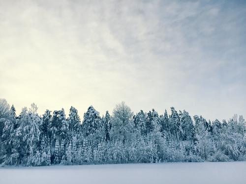 elisabethredlig snow winter nature roads trees sweden north nordic cold blue europe landscape sky scenery outdoors