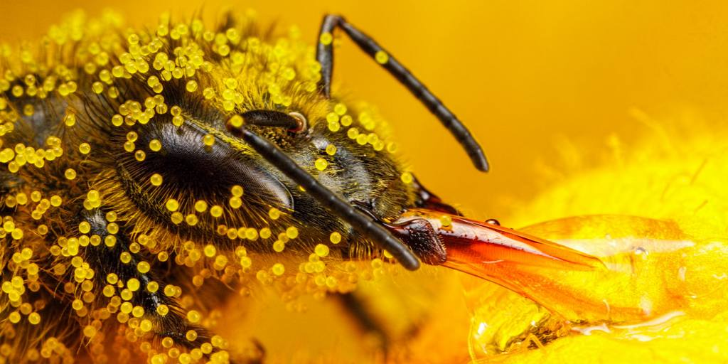 Un robot allemand danse pour communiquer avec les abeilles