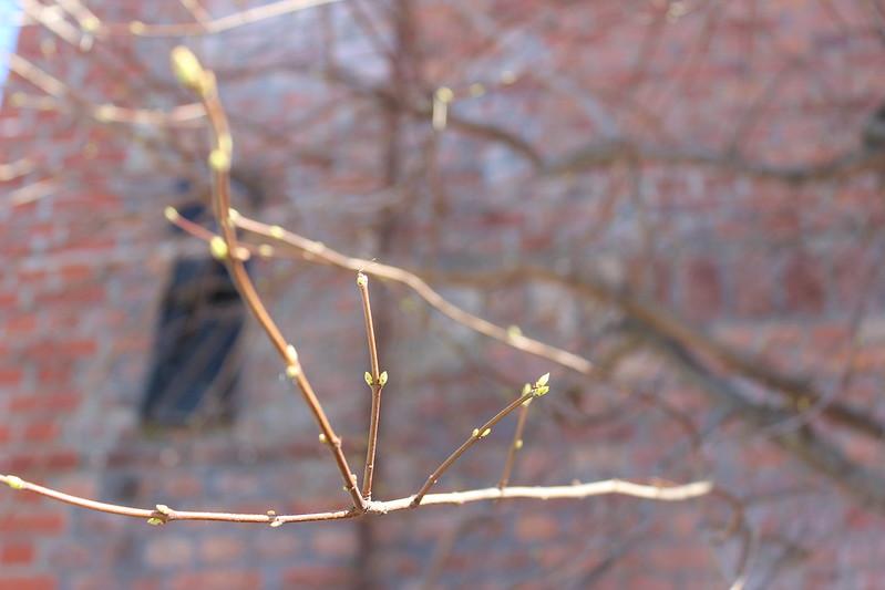 Spring / etdrysskanel.com
