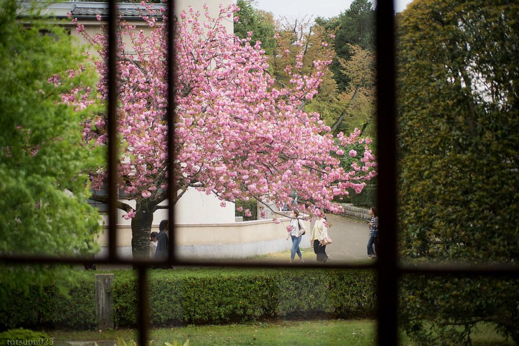 2018-04-07 春色の窓 001-2