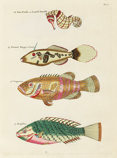Colourful and surreal illustrations of fishes and sea horse found in Moluccas (Indonesia) and the East Indies by Louis Renard (1678 -1746) from Histoire naturelle des plus rares curiositez de la mer des Indes (1754).