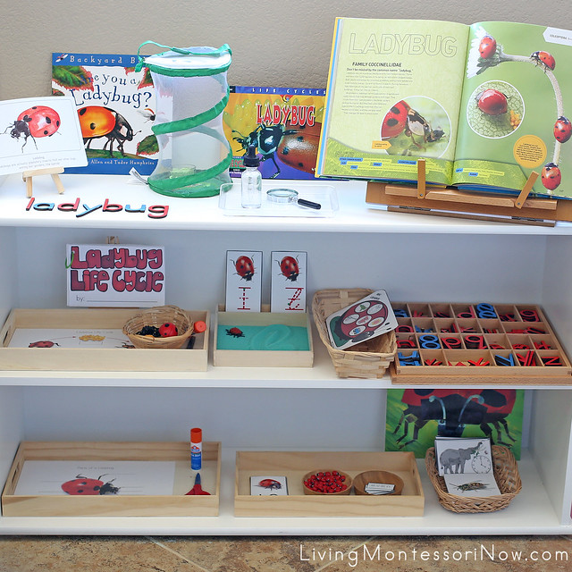 Montessori Shelves and Book Basket with Ladybug-Themed Activities