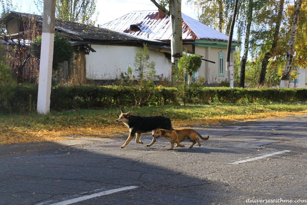 Kyrgyzstan travel_366
