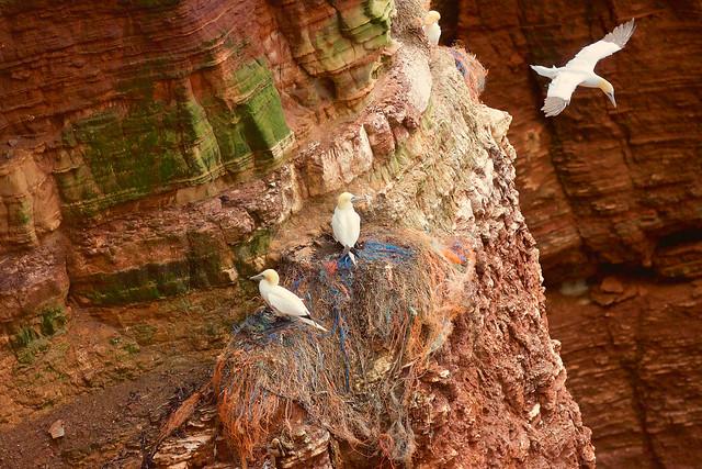 Dangerous nests // Gefährliche Nester