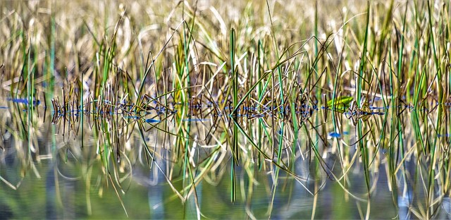 grasses, water, mirror, Fujifilm X-H1, XF55-200mmF3.5-4.8 R LM OIS