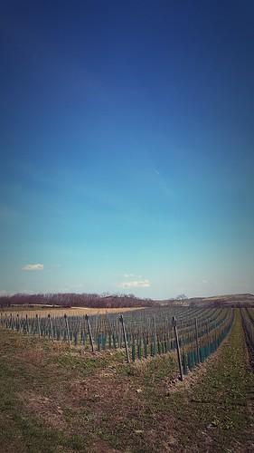 Wiedener Weingärten