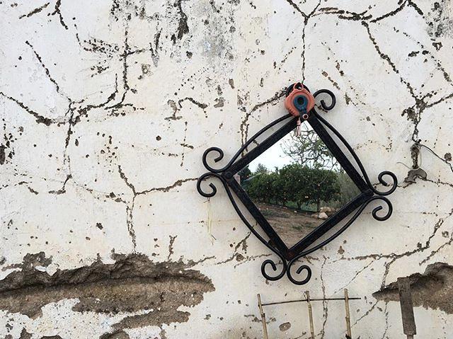 Em Silves até há laranjas nas paredes #silvesacapitaldalaranja