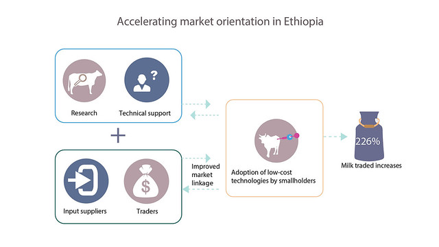 Achieving higher levels of productivity and market participation through technological innovation, Ethiopia (Photo credit: ILRI/Bethlehem Alemu and Apollo Habtamu)