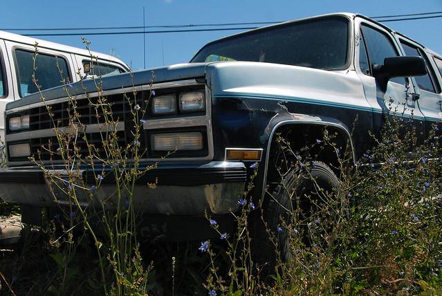 car junk yard (3)