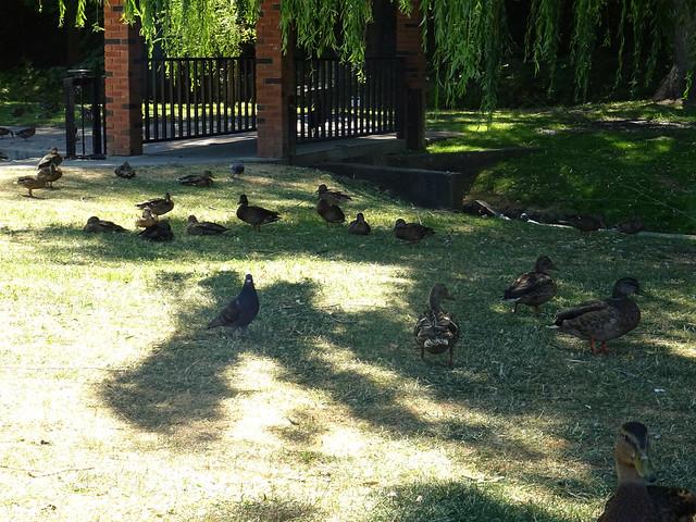Polson Park (29)