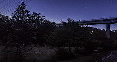 Lightning Bugs under the stars