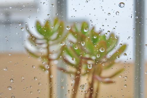 Lo que trajo la lluvia