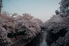 Photo:岩倉桜まつり2018 (Iwalkura Aichi, Japan) By kzy619