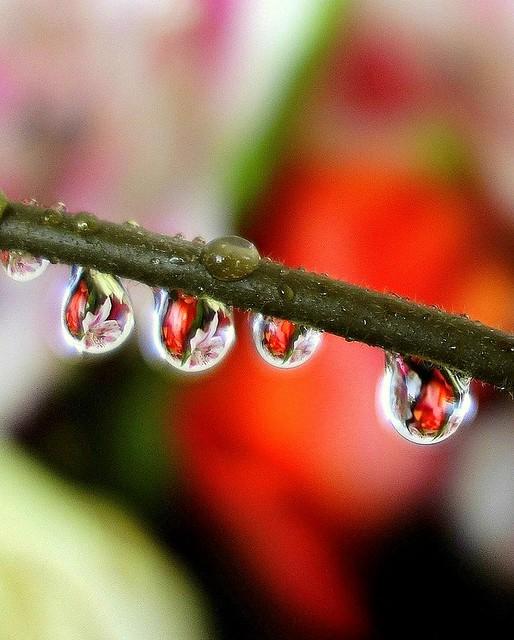 Flowers in drops of water