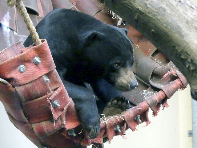 Malaienbär, Burgers Zoo