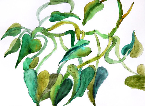 A watercolour sketch of an Arrowhead Philodendron