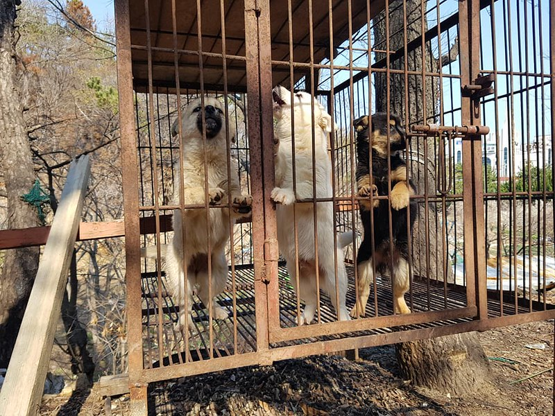 [Update: 4/9/18] Busan KAPCA Shutting down dog farm with Ulsan Dong-gu District Office
