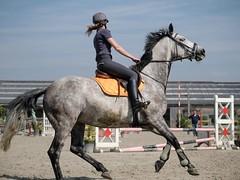 Torhout horses