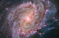 The Southern Pinwheel, Messier 83 (M83)