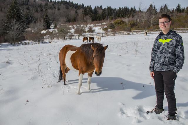 david and pony