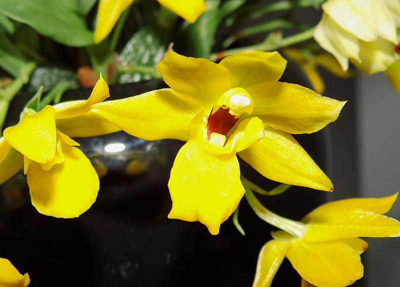 Orchideen-Neuzugang 2 - Seite 2 39310220420_a3048562ee_b