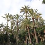 rincon-con-palmeras
