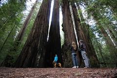 IMG_4216-Humblolt Redwood State Park