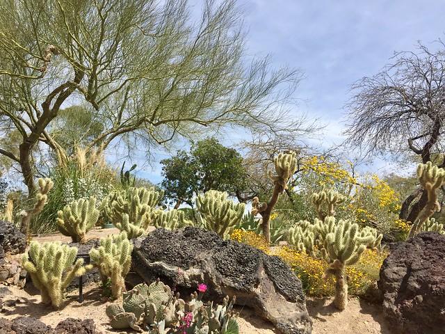 Ethel M Chocolate Cactus Garden