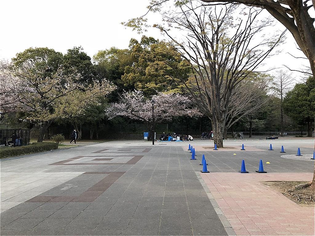 20180331_光ヶ丘 (11)