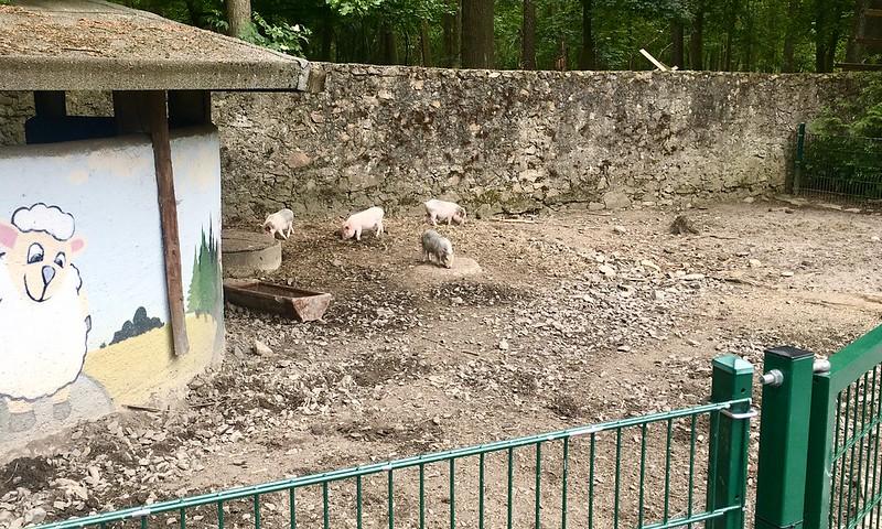 eläinpuisto_minipossut