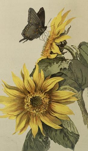ButterflySunflower