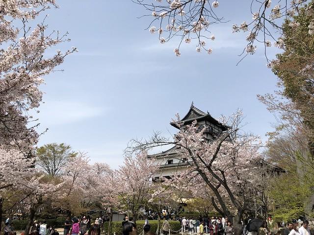 犬山城と桜 IMG_0231
