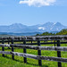 Small photo of Happy Fence Friday