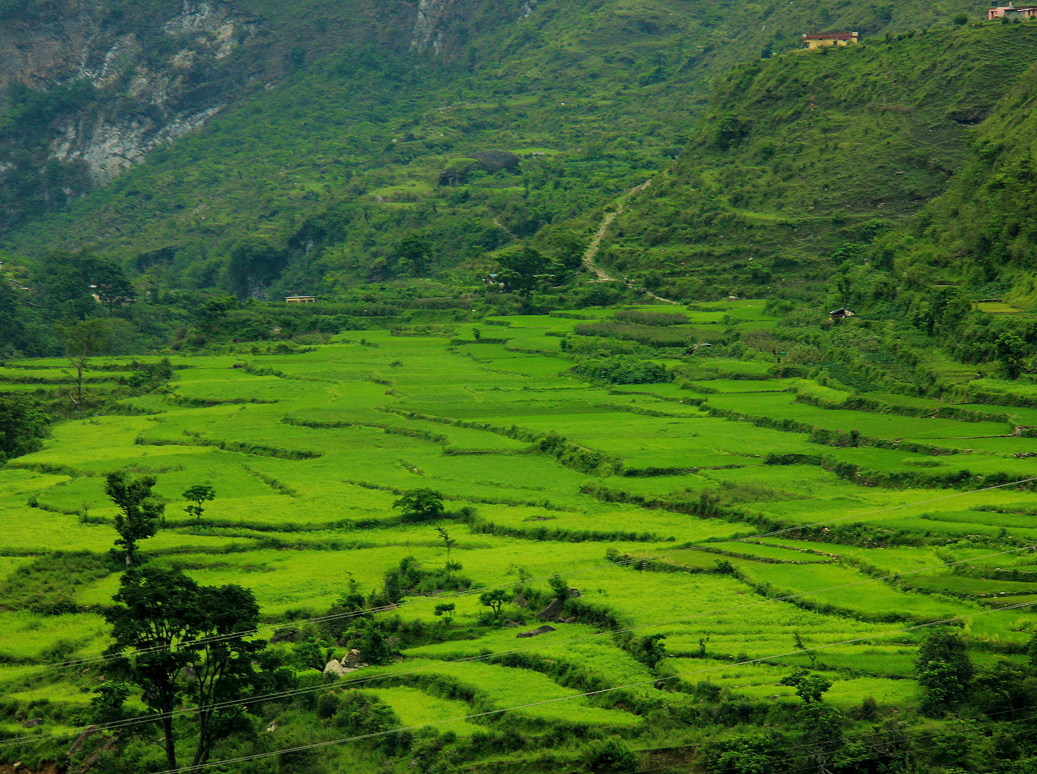 Rice is cultivated around the villages at uttarakhand prayags