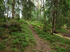 Furholenstien- Trippestadskogen