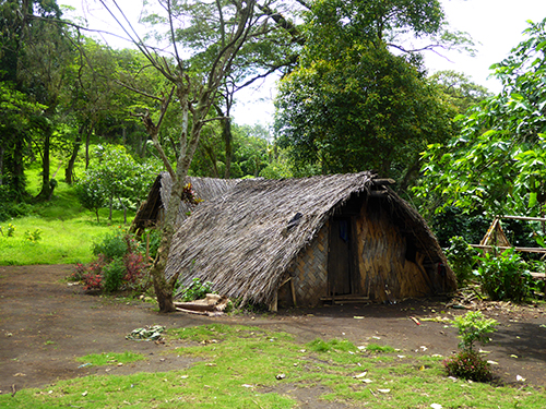 Traditional Ni-Vanuatu housing constructed from reed thatch roofing along with bamboo lined walls.