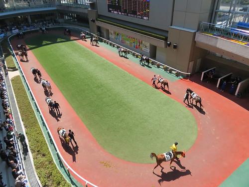 福島競馬場の4階から見たパドック