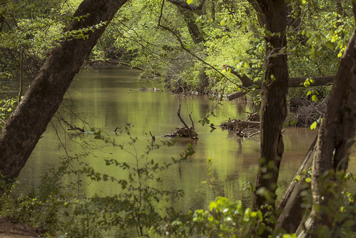 approved river spring color green morning hike bank riverbank reflections reflect hiking nature naturephotography landscape landscapephotography trees leaves