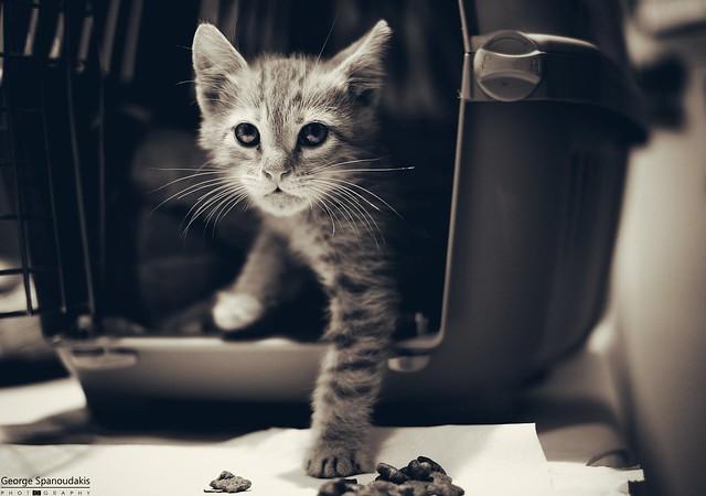 new adorable kitty found!, Fujifilm X-T20, XF35mmF1.4 R