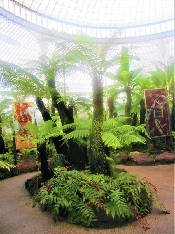 glasgow-ecosse-botanic-gardens-kibble-palace-thecityandbeauty.wordpress.com-blog-voyage-IMG_0071 (3)
